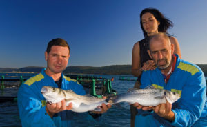Fonda Family - Fisch - Biologischer Branzino
