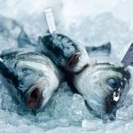 Fisch - Biologischer Branzino